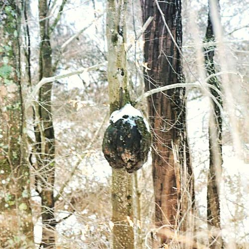 Formygirlfriends Burl Trees Natureonly igers_of_wv wv_igers wv_nature naturelovers