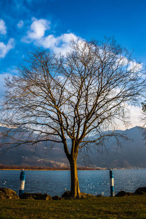 Bare Tree Beauty In Nature Blue Cloud - Sky Day Grass Horizon Over Water Landscape Langbart Lovere Mountain Nature No People Outdoors Scenics Sea Sky Travel Destinations Tree Water