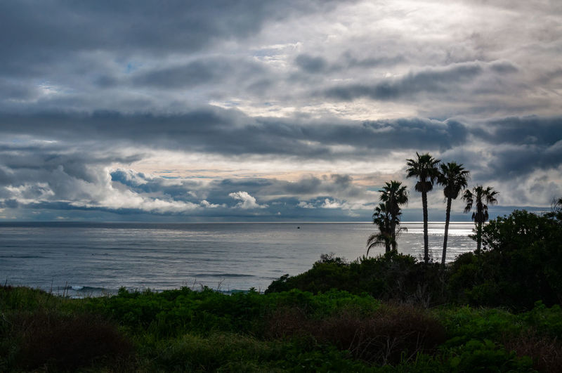 Sunset Cliffs Natural Park and Plant Preserve looking out over a dramatic stormy sky over the ocean. Sky Cloud - Sky Water Tree Plant Sea Beauty In Nature Scenics - Nature Land Tranquil Scene Tranquility Beach Nature No People Horizon Palm Tree Tropical Climate Outdoors Horizon Over Water