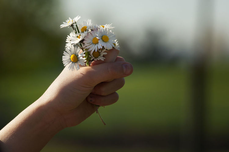 Close-up Cropped Flower Focus On Foreground Fragility Freshness Holding Human Finger Leisure Activity Lifestyles Nature Outdoors Part Of Selective Focus Unrecognizable Person