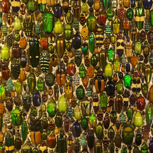 The Beetles Display of Beetles at the Montreal Insectarium, Montreal, Quebec, Canada Beetles Bug Montréal Nature Quebec Animal Arrangement Backgrounds Canada Close-up Closeup Collection Colorful Display Full Frame Indoors  Insect Insectarium Large Group Of Objects Multi Colored No People Variation
