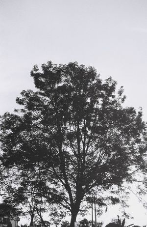 Welcome To Black Growth Tree Sky Nature Low Angle View No People Outdoors Day Silhouette Clear Sky Beauty In Nature Low Section Blackandwhite Lifestyles Eyemphotography EyeEmNewHere Analogphotography Feeling Creativity Inthemoment Filmisnotdead Analog EyeEm Best Shots Life