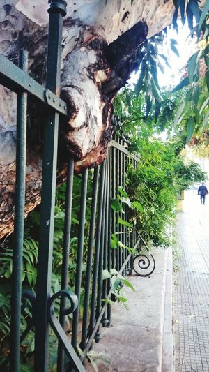 Metallic Fence Old Tree Beautiful Nature Discover Your City Urban Exploration Green
