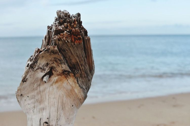 Close-Up Of Driftwood Against Beach