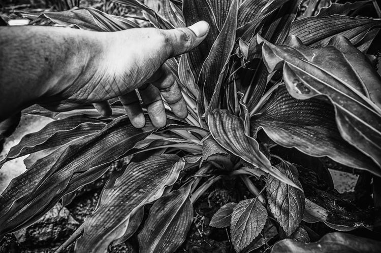 My first HDR, maybe. ☺ My Hand  Close-up Growth Outdoors Beauty Nature Beauty In Nature Dramatic Angles Black And White Black & White Monochrome