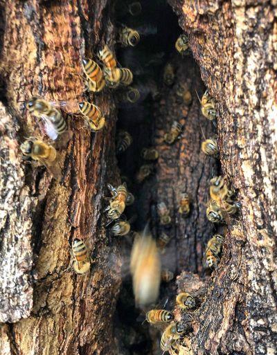 Pollen Idaho