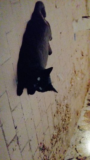 My Beautiful Lux Black Cat cat Things I Like