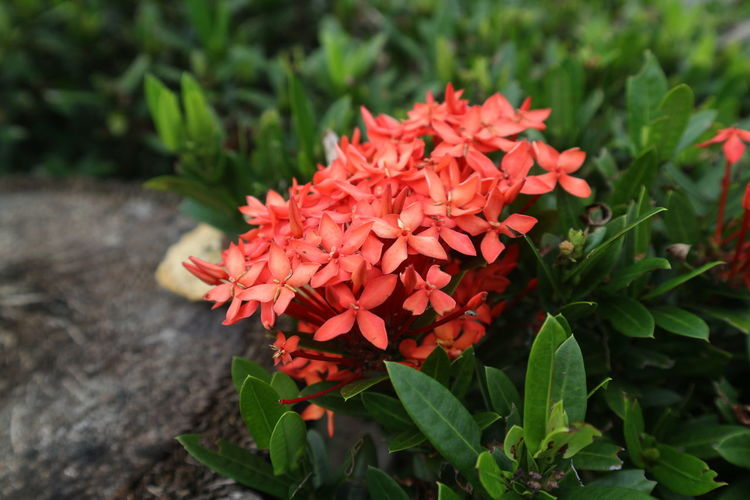 Beauty In Nature Blooming Close-up Day Flower Flower Head Fragility Freshness Growth Leaf Nature No People Outdoors Petal Plant Spike Flower