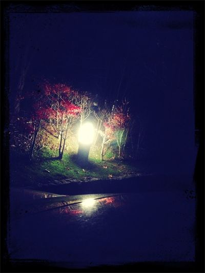 Lights in autumn night