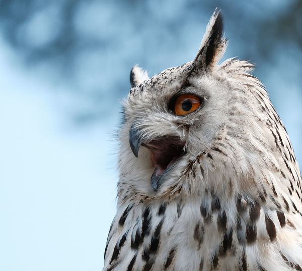 Close-up of owl outdoors