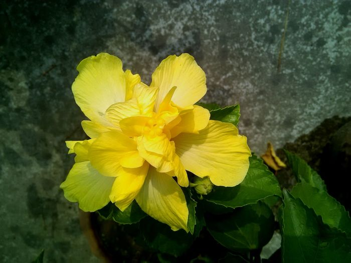 Flowers On My Roof Yellow First Eyeem Photo