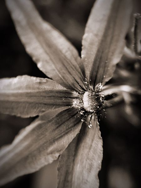 When I looked at this the 1st thing to come to mind was B/W. Hanging Out Relaxing Taking Photos Enjoying Life Mississippi Summer Iphone6plus Bloom Focus On Foreground Purple Flower Blackandwhite
