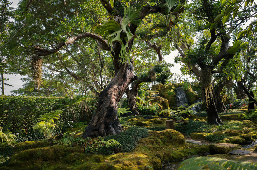 Beauty In Nature Day Environment Foliage Forest Green Color Growth Land Lush Foliage Nature No People Non-urban Scene Outdoors Plant Scenics - Nature Tranquil Scene Tranquility Tree Tree Trunk Trunk WoodLand