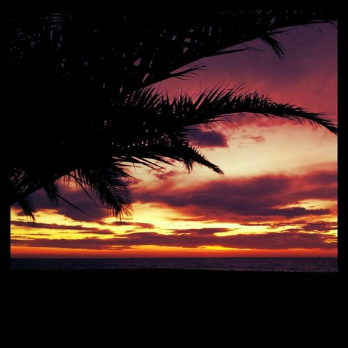 Clouds Beach Sky Landscape Colours Costa Brava Palmeras