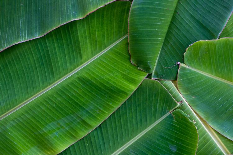 Full frame shot of leaves on plant