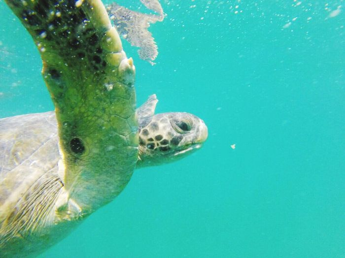 Close-up of turtle swimming undersea