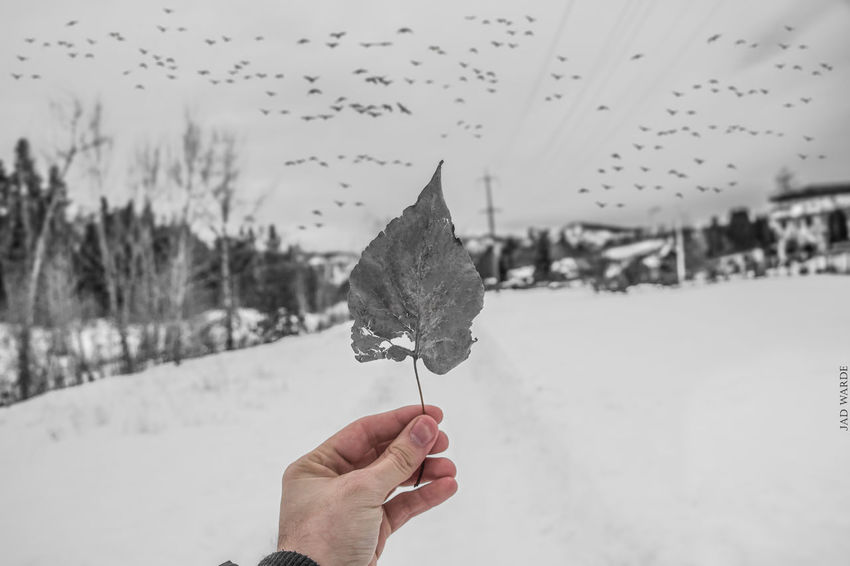 Human Hand Human Body Part Focus On Foreground One Person Personal Perspective Human Finger Holding Real People Outdoors Day Sky Adults Only Close-up Tree Cold Temperature People Adult Only Women