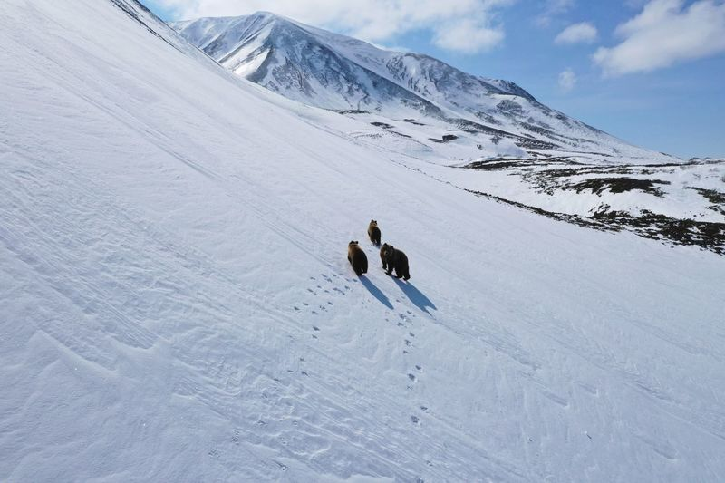 High angle view of bears walking on snow covered mountain