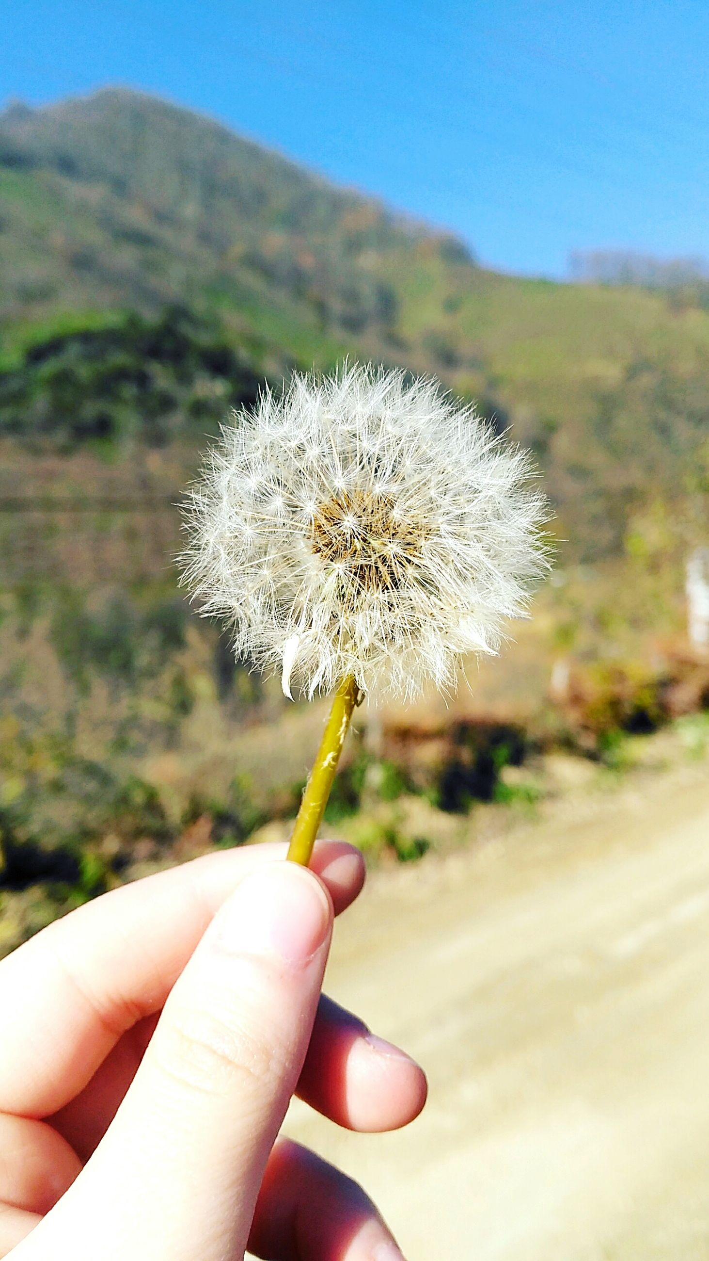 human hand, focus on foreground, flower, nature, fragility, outdoors, close-up, human body part, holding, flower head, beauty in nature, one person, day, plant, seed, real people, freshness, sky