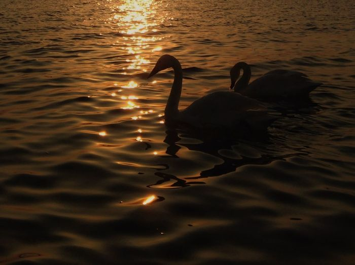 IPhone IPhoneography Water Reflection Bird Photography Light And Shadow EvningGlow