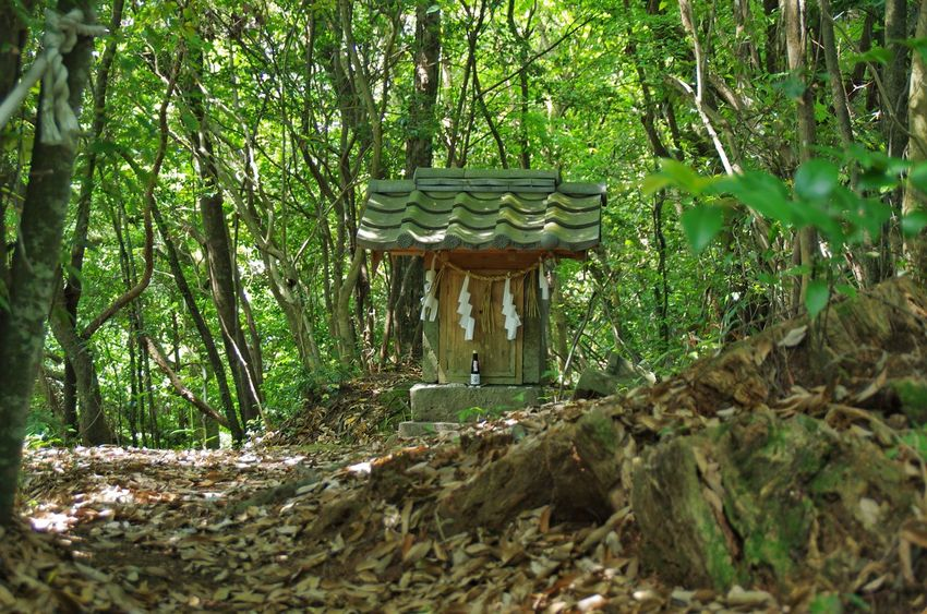 Shrine Forest Tree Trees Green Moutains Traveling Oita 大分 Japan Silence Sacred Ultimate Japan Hidden Gems