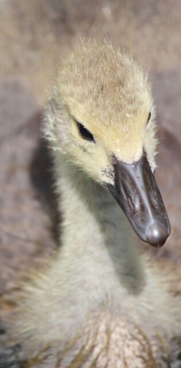 animals in the wild, one animal, animal wildlife, animal themes, beak, close-up, bird, no people, day, outdoors, nature