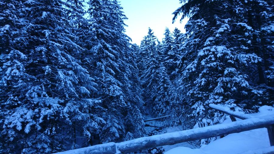 Winter Snow Cold Temperature Tree Nature Blue Beauty In Nature Outdoors Landscape Forest Traveling Taking Photos Holiday - Event Hello World Relaxing Enjoying Life Winter Landscape Winterscapes Winter Sky Wintertime Beauty In Nature FreeTime Landscape_photography Travel Photography Nature