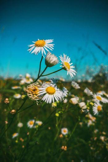 #blossom EyeEm