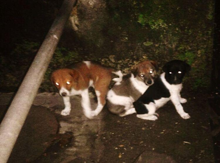 Puppies Puppylove 😘😍🐶 Puppies Of Eyeem Puppyeyes Puppy Playtime Puppylife Strey Dogs Puppies
