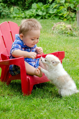 A baby boy is curious about this new little puppy and the puppy is curious about the boy Baby Children Red Chair Touch Bonding Boy Canine Child Childhood Childhood Memories Domestic Domestic Animals Innocence Kid Landscape Male Mammal One Animal One Person Outdoors Pet Pet Owner Pets Real People Sitting