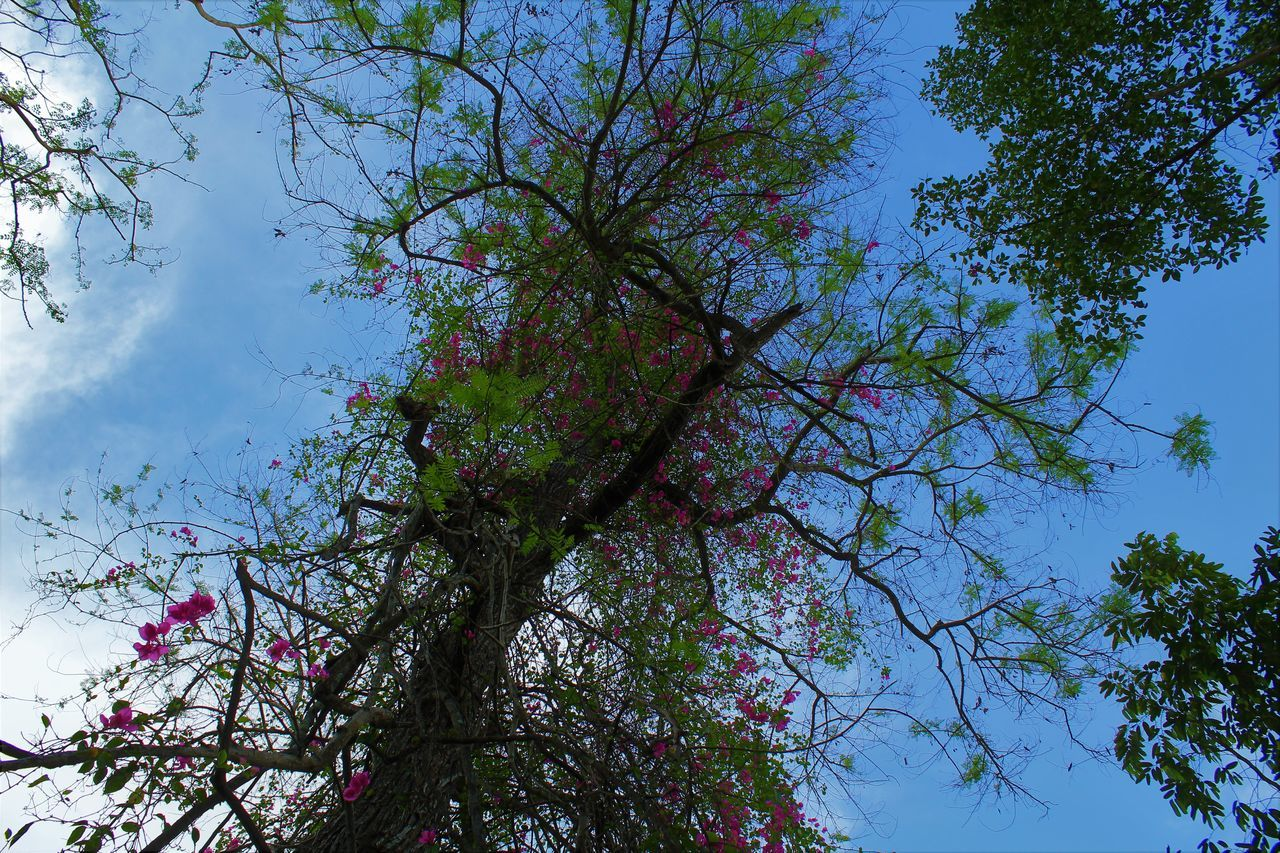 tree, low angle view, branch, nature, growth, beauty in nature, day, sky, no people, outdoors, blue, tranquility, flower, scenics