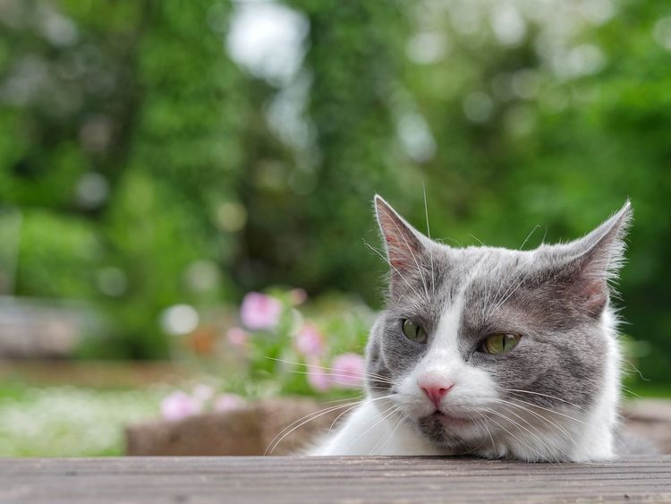 Cat Cats Animals Outdoors Pet Animal Themes Feline Cat Watching Animal Head  Animal_collection Domestic Animals Feline Portraits Macro Close Up Close-up Garden Pet Photography  The Essence Of Summer Blurred Background