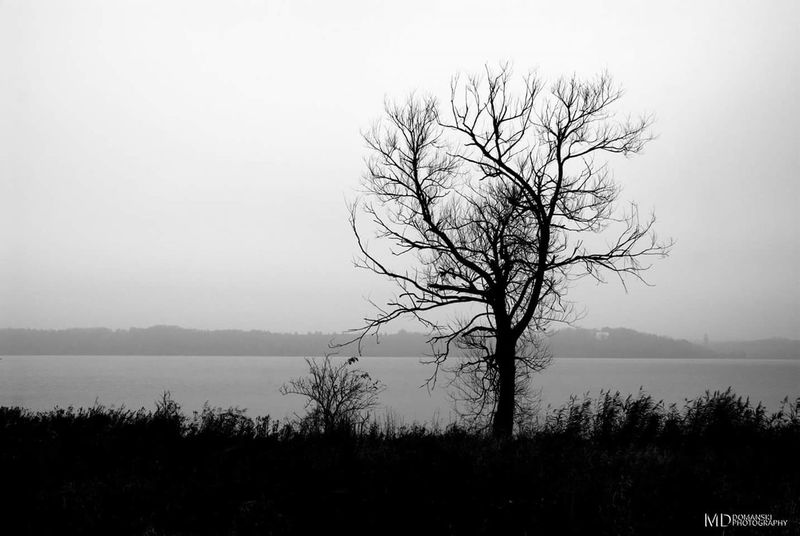 Tree Beauty In Nature Fog Bare Tree Reflection Scenics Water Silence Horizon Over Water No People Landscape Nature Outdoors Bw BW_photography