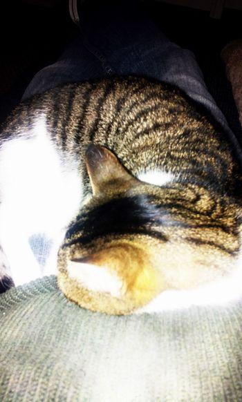 Relaxing Couchpotato Cats Of EyeEm