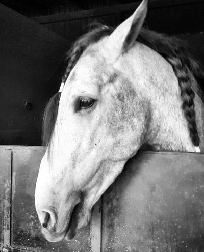 Horse Horse Head Blackandwhite Expression Caballo Nature Caballo ESPAÑOL Texture Eye EyeEm
