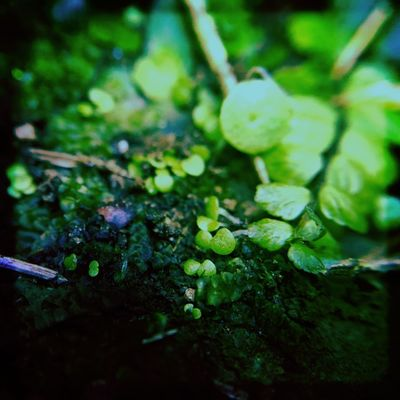 Plants Nature Freshness Green Color Growth Close-up Macro Microscape  New Life Beauty In Nature