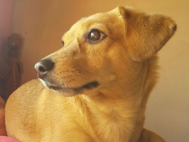 Dog Pets One Animal Domestic Animals