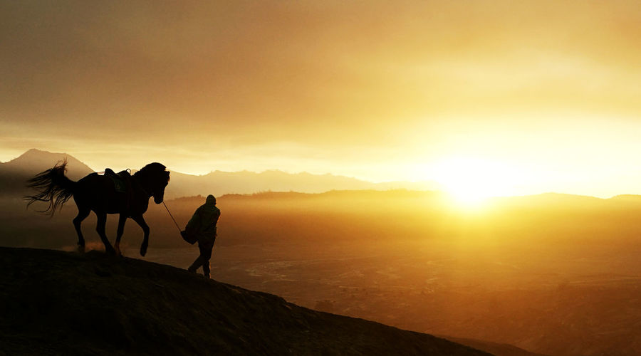 Silhouette man with horse on land against sky during sunset