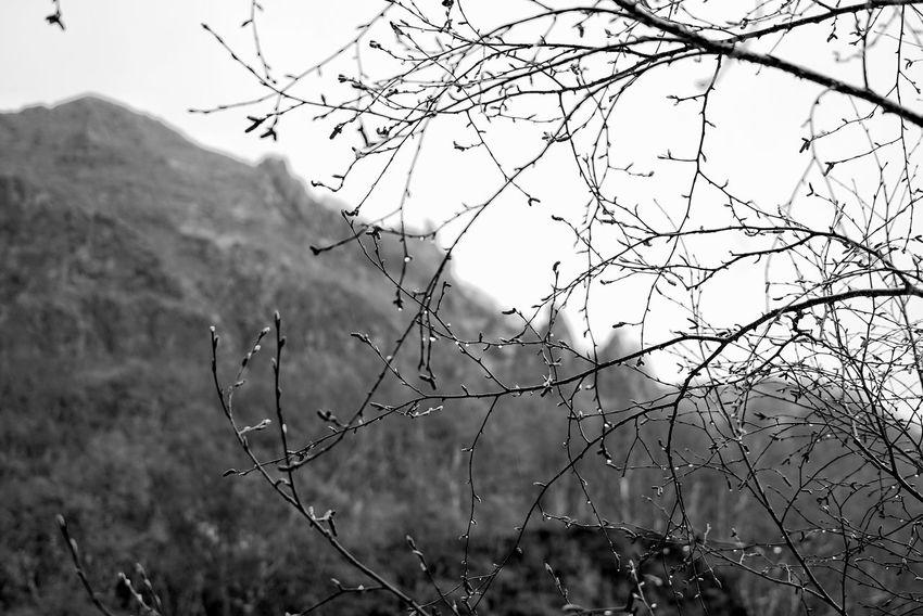 China Photos 백두산 백두산폭포 Hugging A Tree Rainy Days Tree Treepark Branch Of A Tree Raindrops Silhouette Bnw Bnw_life Black And White Blackandwhite Taking Photos Travel Feel The Journey Monochrome Photography Changbai Mountain, China Streamzoofamily The Great Outdoors - 2017 EyeEm Awards