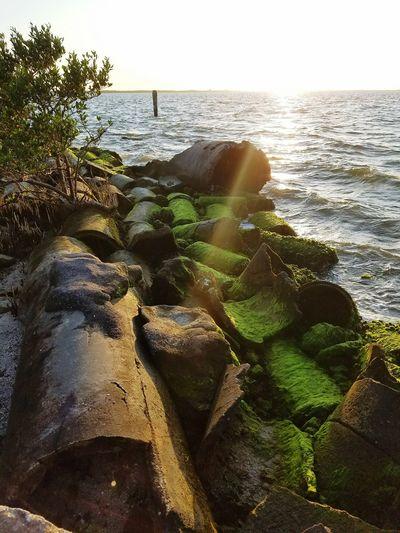 Nature's Diversities Florida Sunset Beachlife Saltlife Tampa, FL First Eyeem Photo