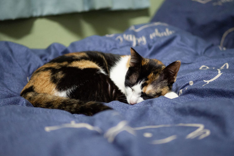 Cat is sleeping Domestic Pets Animal Mammal Animal Themes Cat Domestic Animals Domestic Cat Vertebrate Feline Relaxation Bed One Animal Furniture Indoors  No People Sleeping Resting Textile Lying Down Whisker Kitten