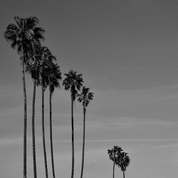 Here Belongs To Me L.A. Losangeles Cali California California Love Palm Trees Monochrome Photography Iconic Bnw_collection Bnwphotography Bnw_worldwide Bnw_captures Bnw_society Bnw_planet Bnw_life Blackandwhite Monochrome Minimalism Black And White Photography Black & White Lifestyle Photography Streetphotography Black&white Travel California Dreamin Visual Creativity