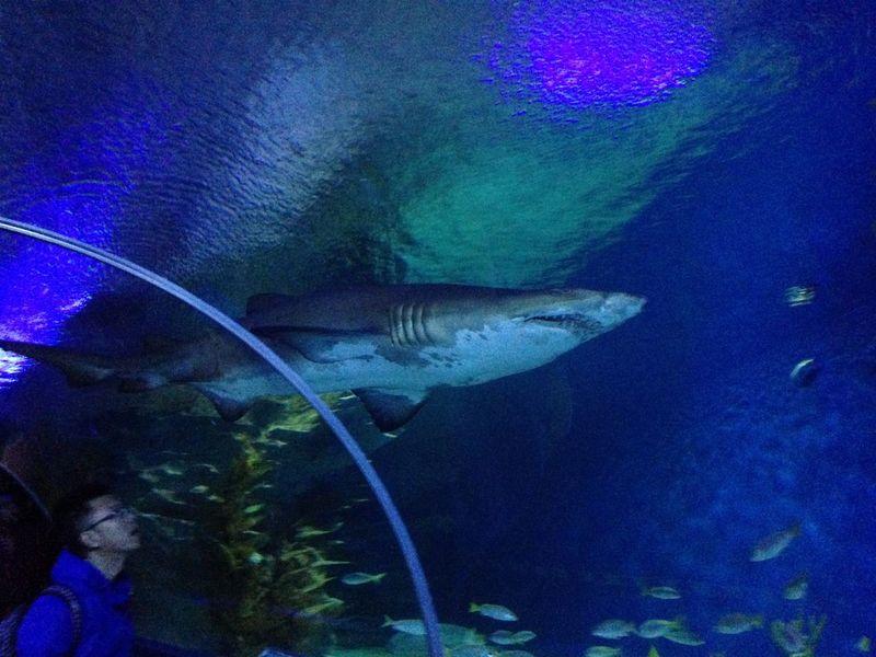 Aquaria Klcc Aquarium Fish Nature Sea Life Shark UnderSea Underwater