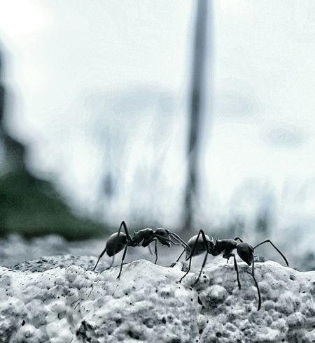 Ants Ants On The Go! Eyemphotography EyeEm Eyeem Philippines EyeEm Gallery Mobilephotography PhonePhotography Samsungs6edge+ Antslife Ants