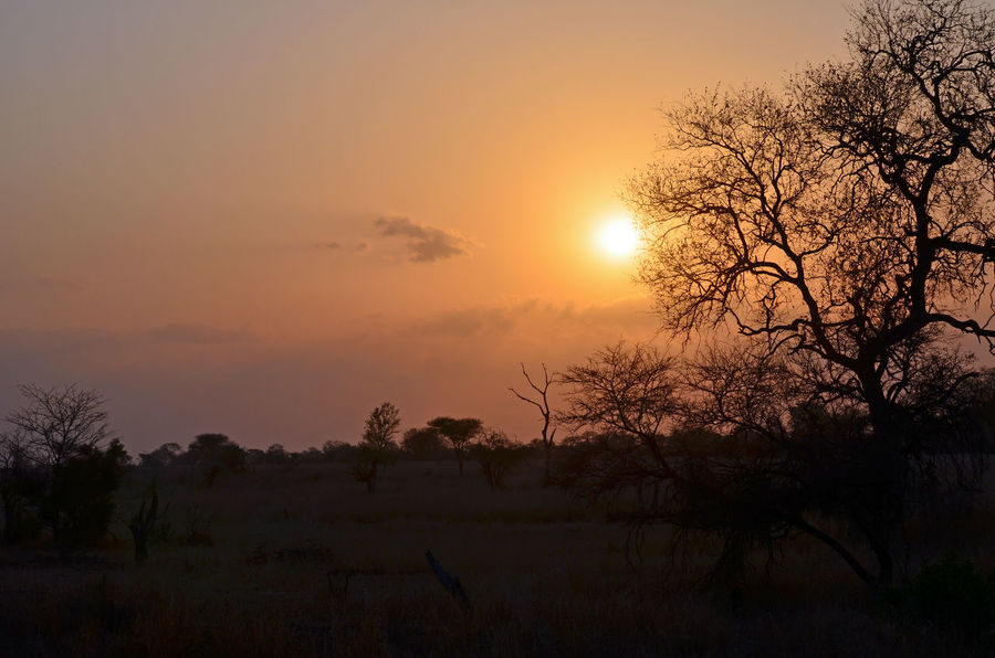 Kruger National Park, South Africa Beauty In Nature Day Field Growth Landscape Nature No People Orange Color Outdoors Scenics Silhouette Sky Sun Sunset Tranquil Scene Tranquility Tree