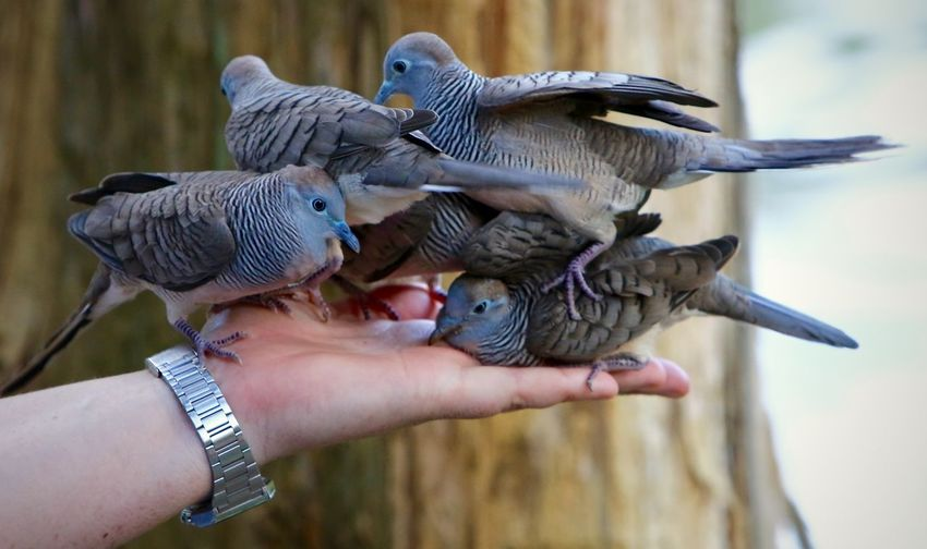 Close-up of birds perching on person hand