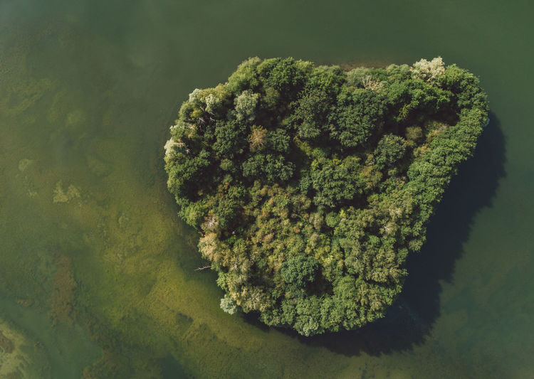 Aerial Shot Trees Aerial View Animals In The Wild Beauty In Nature Close-up Day Forest Green Color Growth Heart Shape High Angle View Island Lake Lake View Nature No People Sea