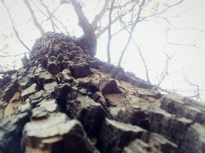 Low angle view of tree trunk against clear sky