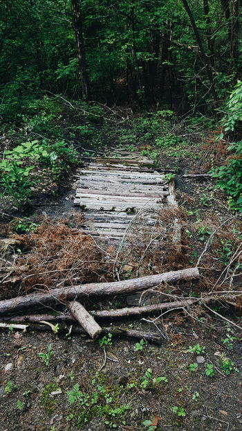 Twigs And Branches Twigs Sticks Greenery Green Nature's Diversities Woods Walk Walking In The Woods Nature Walk Nature Lover The Great Outdoors - 2016 EyeEm Awards Nature Bridge Wood Path In Nature Path Trees Blocked Path Fallen Tree