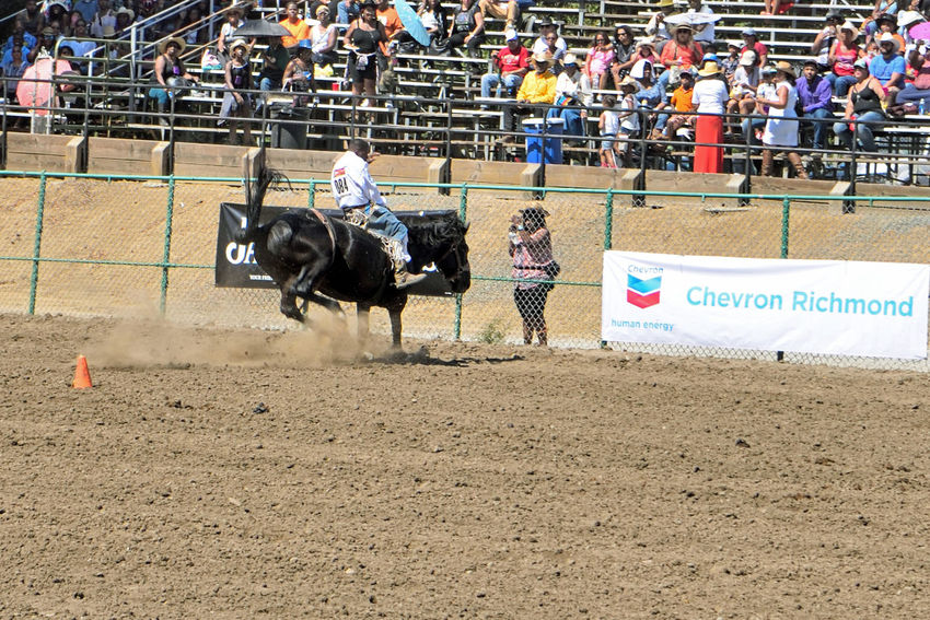 Bare Back Riding At Bill Pickett Rodeo 2 Rowell Ranch Hayward, Ca. Bare Back Riding Timed Event Test Of Speed & Skill Exhibition Bill Pickett Born 1870 Jenks-Branch,Texas Cowboy Rodeo Legend ProRodeo Hall Of Fame Wild West Shows Bill Pickett Invitational Rodeo 33rd Anniversary Equestrian Sport National Touring Rodeo Competition Professional Rodeo Cowboys Association Bucking Bronco Spectator Taking Pictures